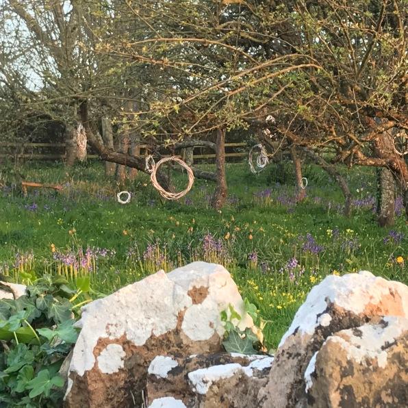 Renewal orchard 1